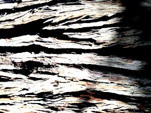 Photo of rough tree bark